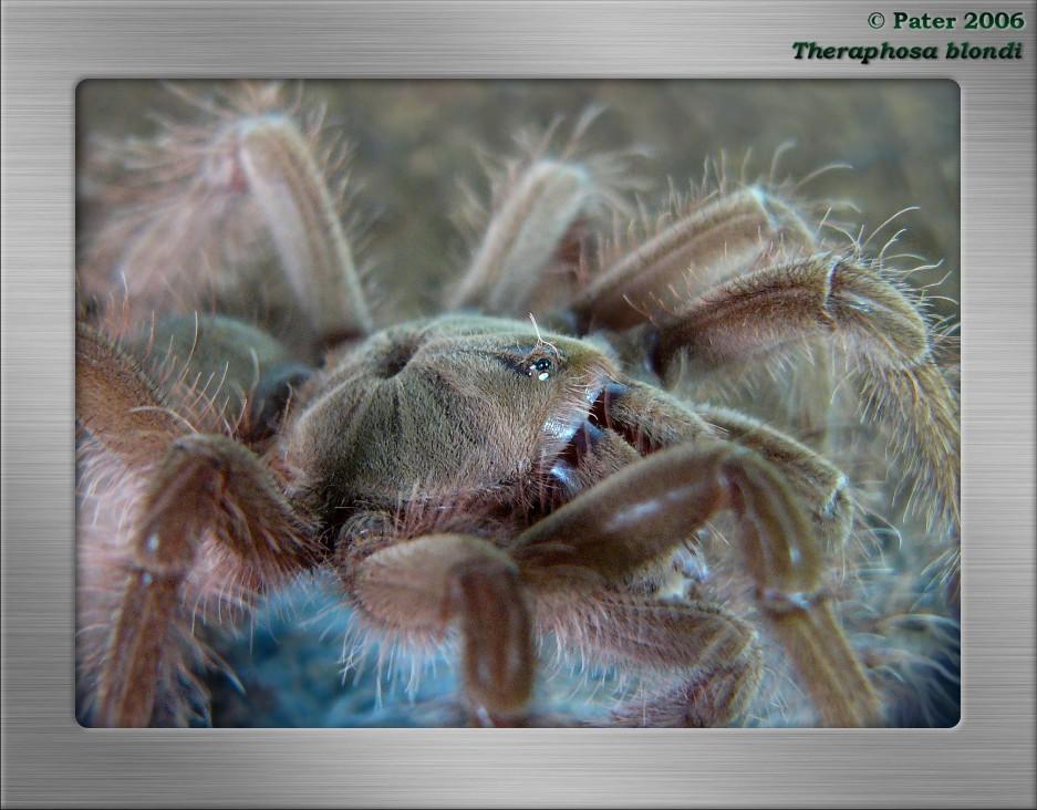 Лучшая фотография с сайта Пауки-Птицееды: фотоальбом