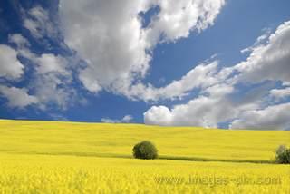 Лучшая фотография с сайта фотограф Андрей Соловьёв
